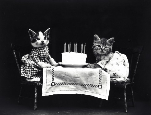 cats-dressed-vintage-photo